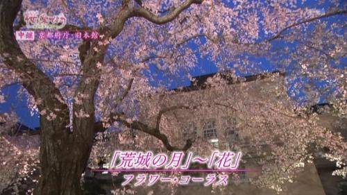 府庁夜桜中継2 (500x281).jpg