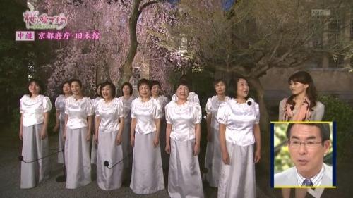 府庁夜桜中継5 (500x281).jpg